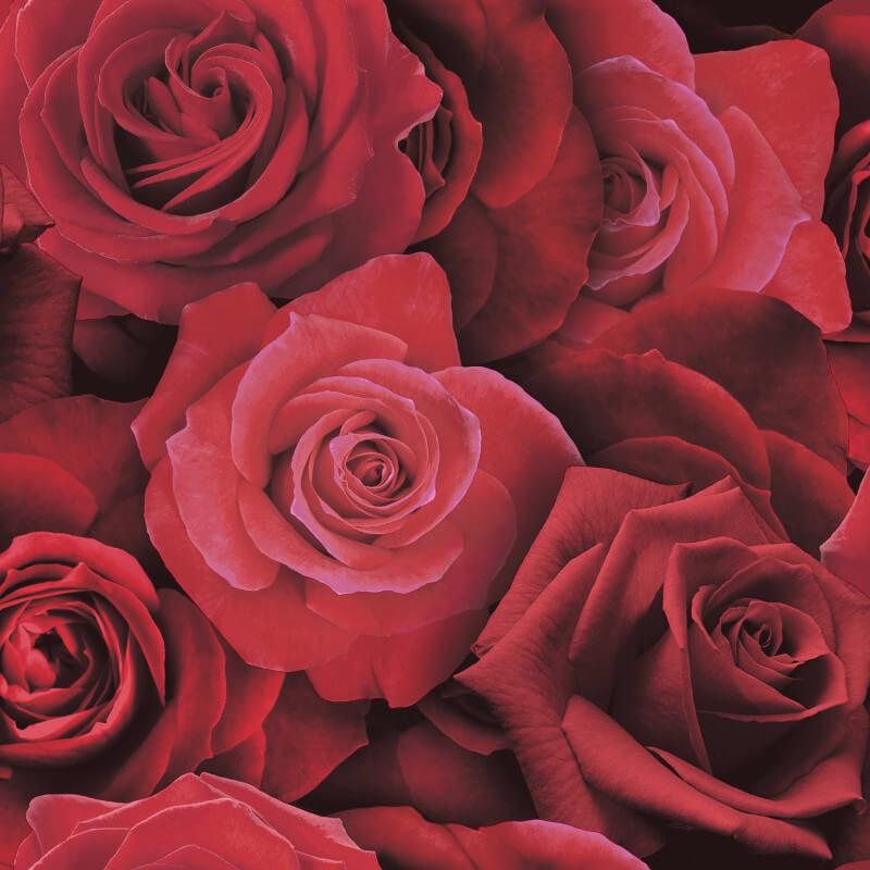 Arthouse Austin Rose Red Wallpaper - 675600