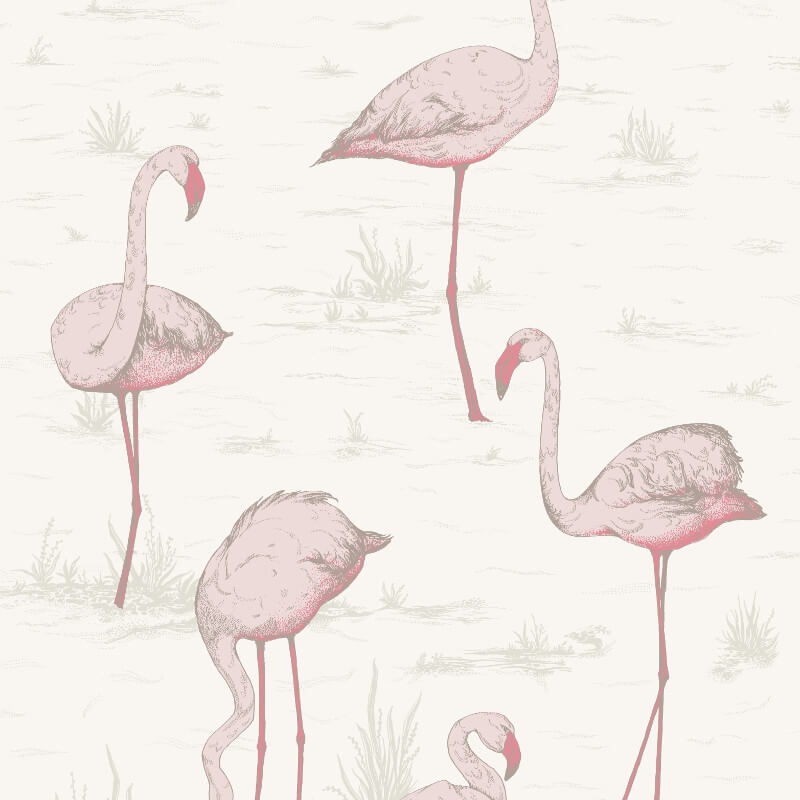 Cole & Son Flamingos Pink/White Wallpaper - 95/8045