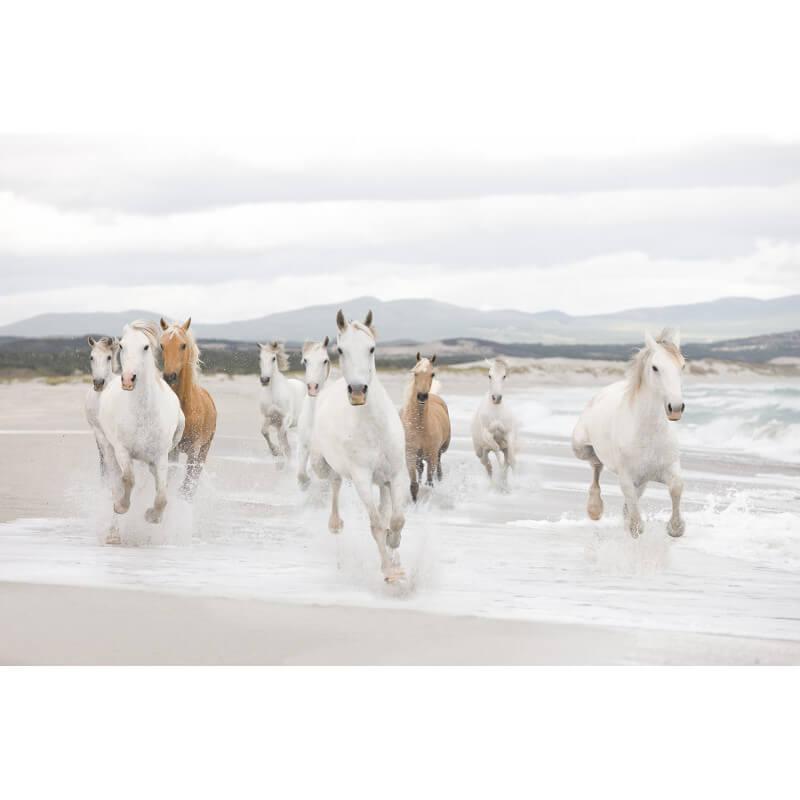 Komar White Horses Scene Wall Mural - 8-986