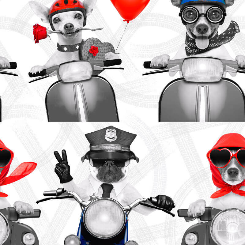 Muriva Biker Dogs Wallpaper in Red, White and Blue - 102561